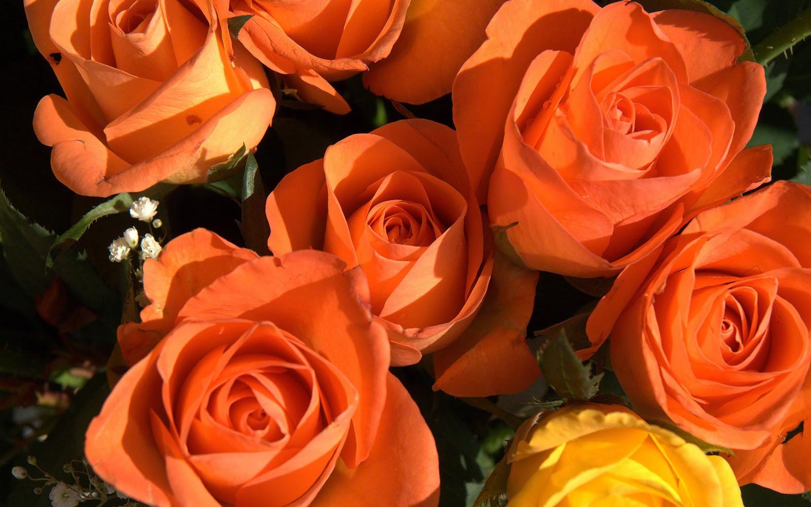 http://3.bp.blogspot.com/-hEx17dbz0yM/TZMxU_eppgI/AAAAAAAAAFI/3t3XDF6wGE0/s1600/roses-photo-wallpaper-02640.jpg