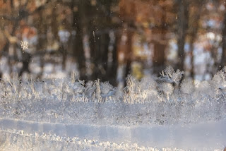 photo of frost on the storm windows