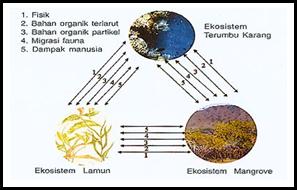 Gambar 8. Interaksi antara tiga ekosistem laut dangkal  (UNESCO, 1983 dalam Hutomo, 2004)