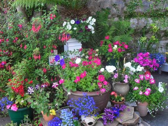 flores coloridas jardim:Memórias de Joana Poesia, : O MEU JARDIM ( Acrostico )