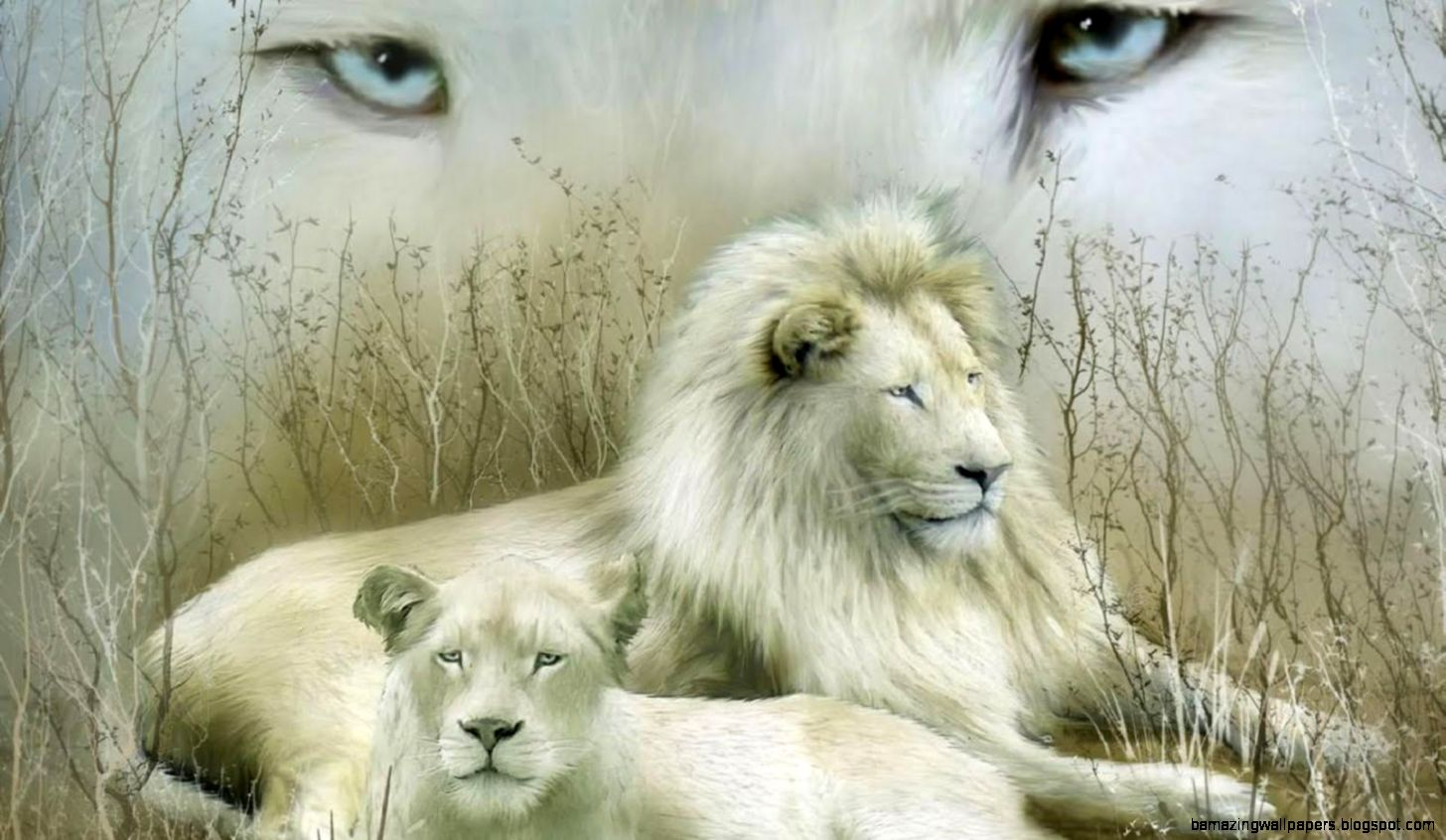 3d white lion wallpaper amazing wallpapers