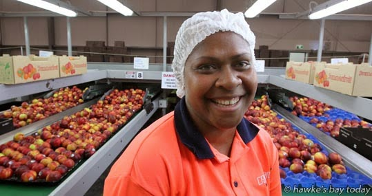 Daiana Samson, an RSE worker from Vanuatu, pictured in the packhouse at Crasborn Group Ltd, Omahu Rd, Hastings. photograph