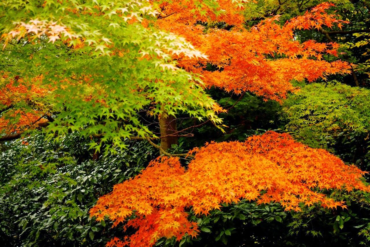 Koishikawa Kōrakuen Gardens, 小石川後楽園, 紅葉