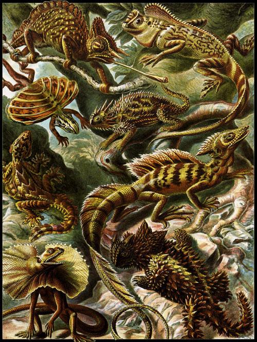 Psynopsis Ernst Haeckel Kunstformen der Natur
