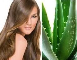 Manfaat Lidah Buaya Untuk Kesehatan dan Kecantikan Rambut
