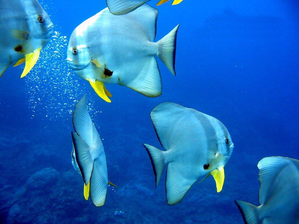 I segreti della natura una memoria da pesci for Sfondi pesci tropicali