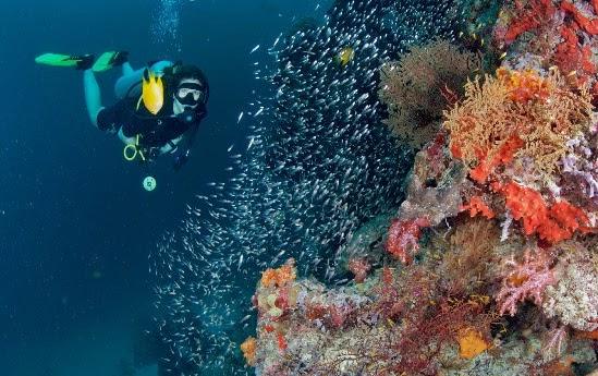 Isla Molokini island, turismo, viajes,