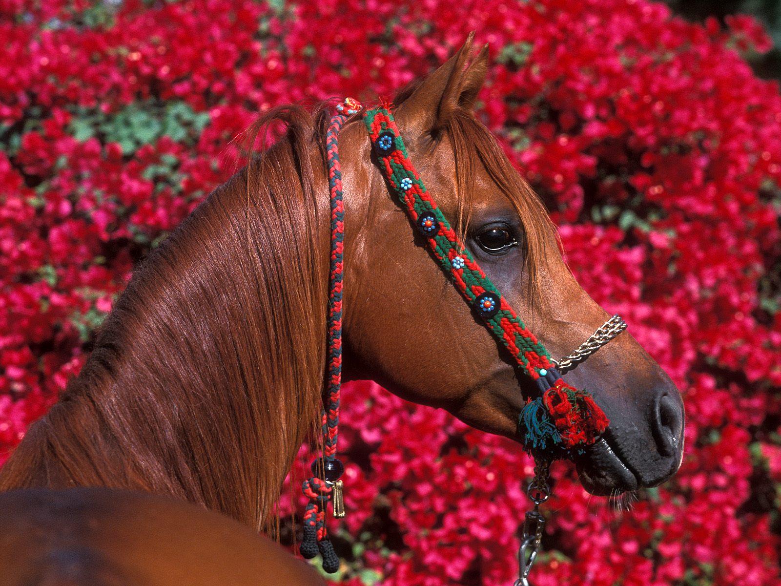 http://3.bp.blogspot.com/-hH-VbVA_qpY/TgfFxtVLxJI/AAAAAAAAFf0/P6FrGWUQwU4/s1600/horse-5314.jpg