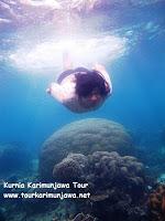 karang menjadi primadona karimun jawa