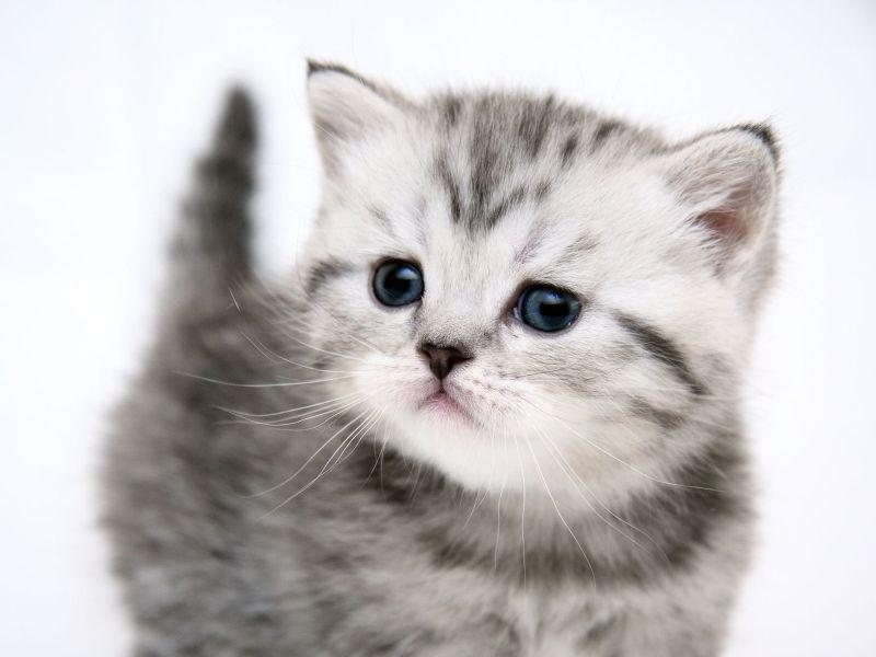 Imágenes de gatitos tiernos | Imagenes bellas de amor