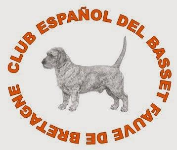 CLUB ESPAÑOL DEL BASSET FAUVE DE BRETAGNE