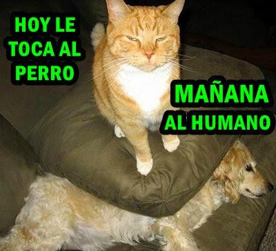 foto-meme-gatos-dominacion-perro.jpg
