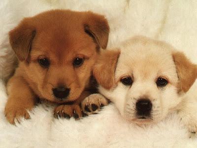 Dog Puppys