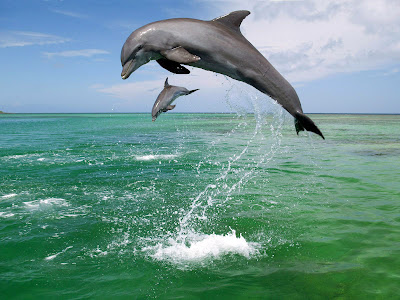 Under water world lets go to see some beautiful wallpaper of