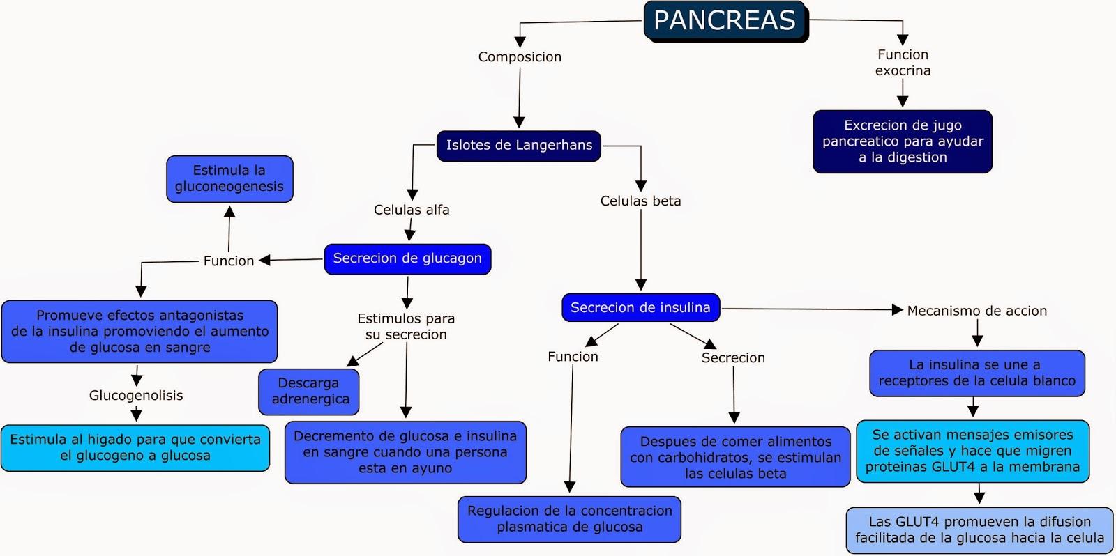 Moderno Ubicación Páncreas Anatomía Humana Molde - Anatomía de Las ...