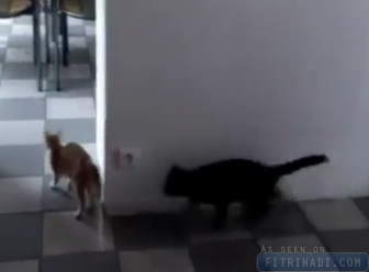 video kucing buat surprise comel