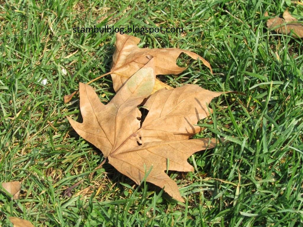 осенние рыжие листья