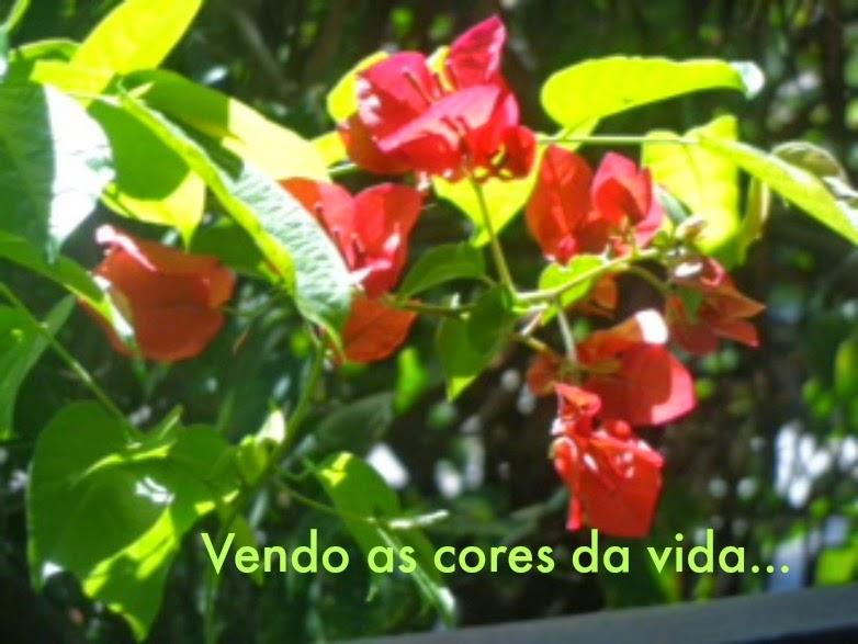 ♥ VENDO AS CORES DA VIDA  ♥