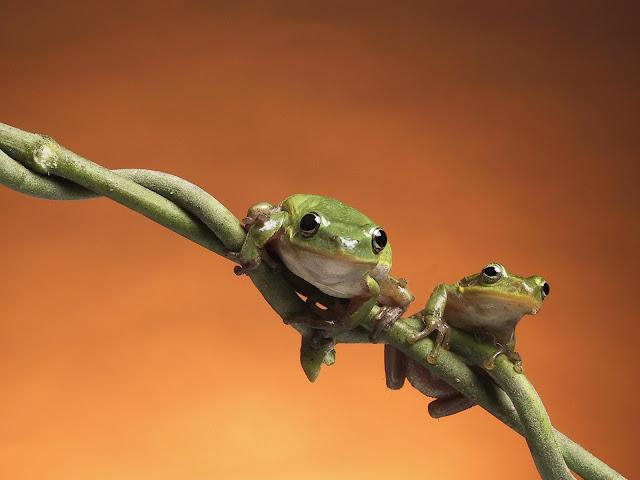 Best Jungle Life vines, vines wallpaper, entangling vines, frogs