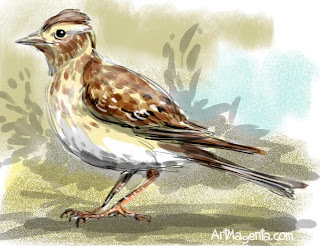 Skylark  is a bird painting by ArtMagenta