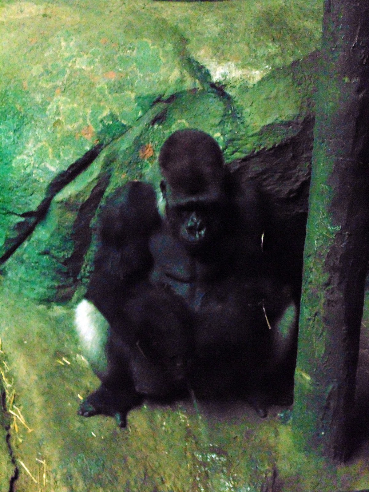 gorilla peeing