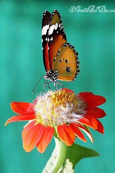 Beautiful butterfly photos