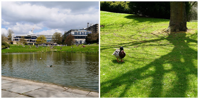 University of Bath and ducks