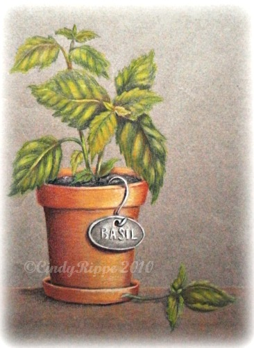 colored pencil, cindy rippe, basil, plants, terra cotta pot, drawing, art classes, philippians 3:12, Growing as an artist