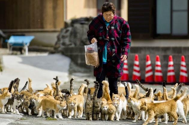 Alimentação das gatas