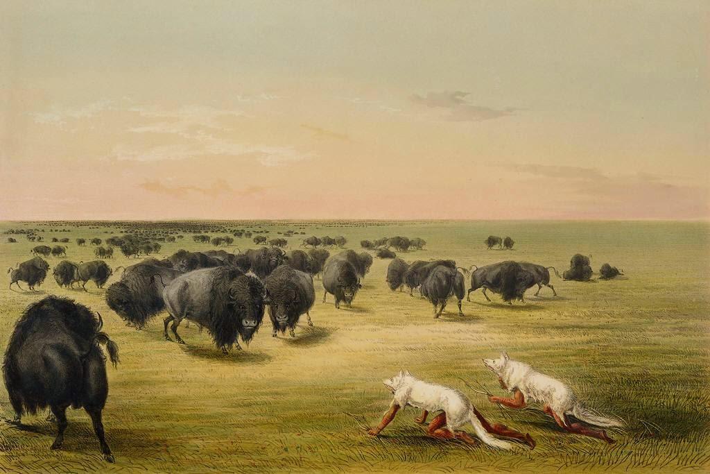 essay hunting animals