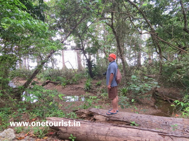 saddle peak trekking ,andaman