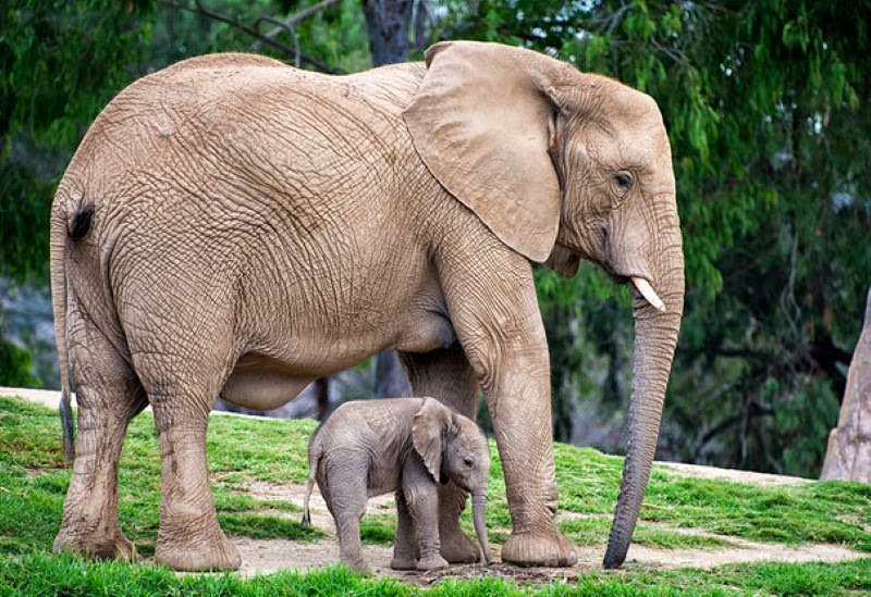 24. A mother elephant and her 2-week old daughter. - 30 Animals With Their Adorable Mini-Me Counterparts