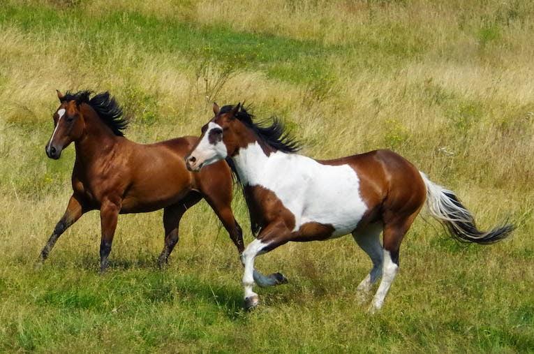 Galloping Horses - From BTBU Blog