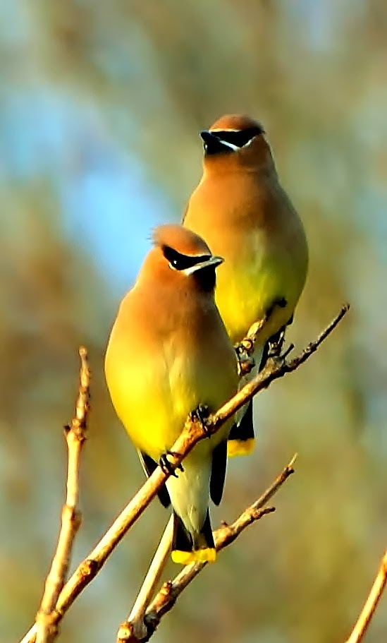 Beautiful and amazing birds of the World