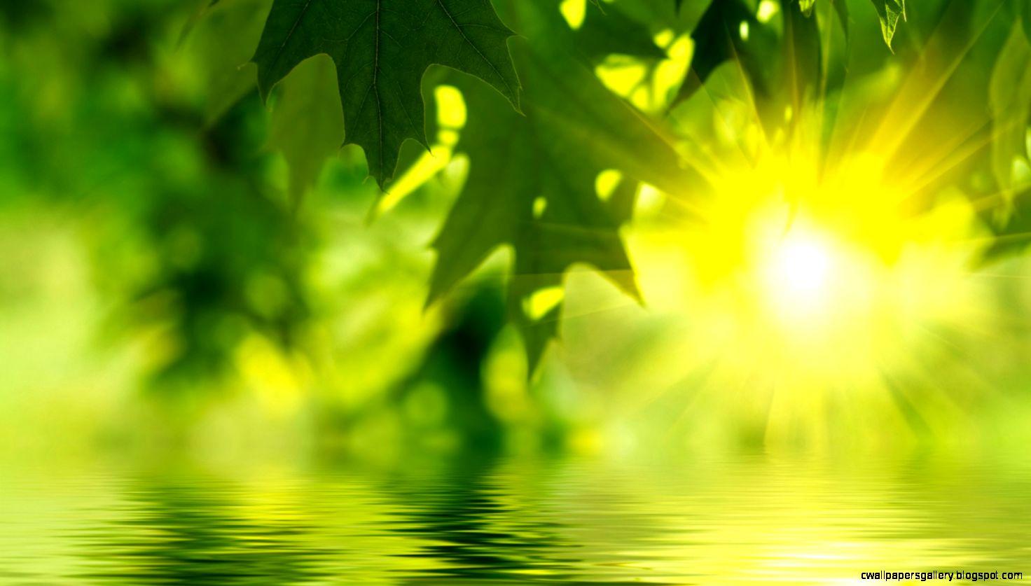 1600x900 Green leaves water Wallpaper