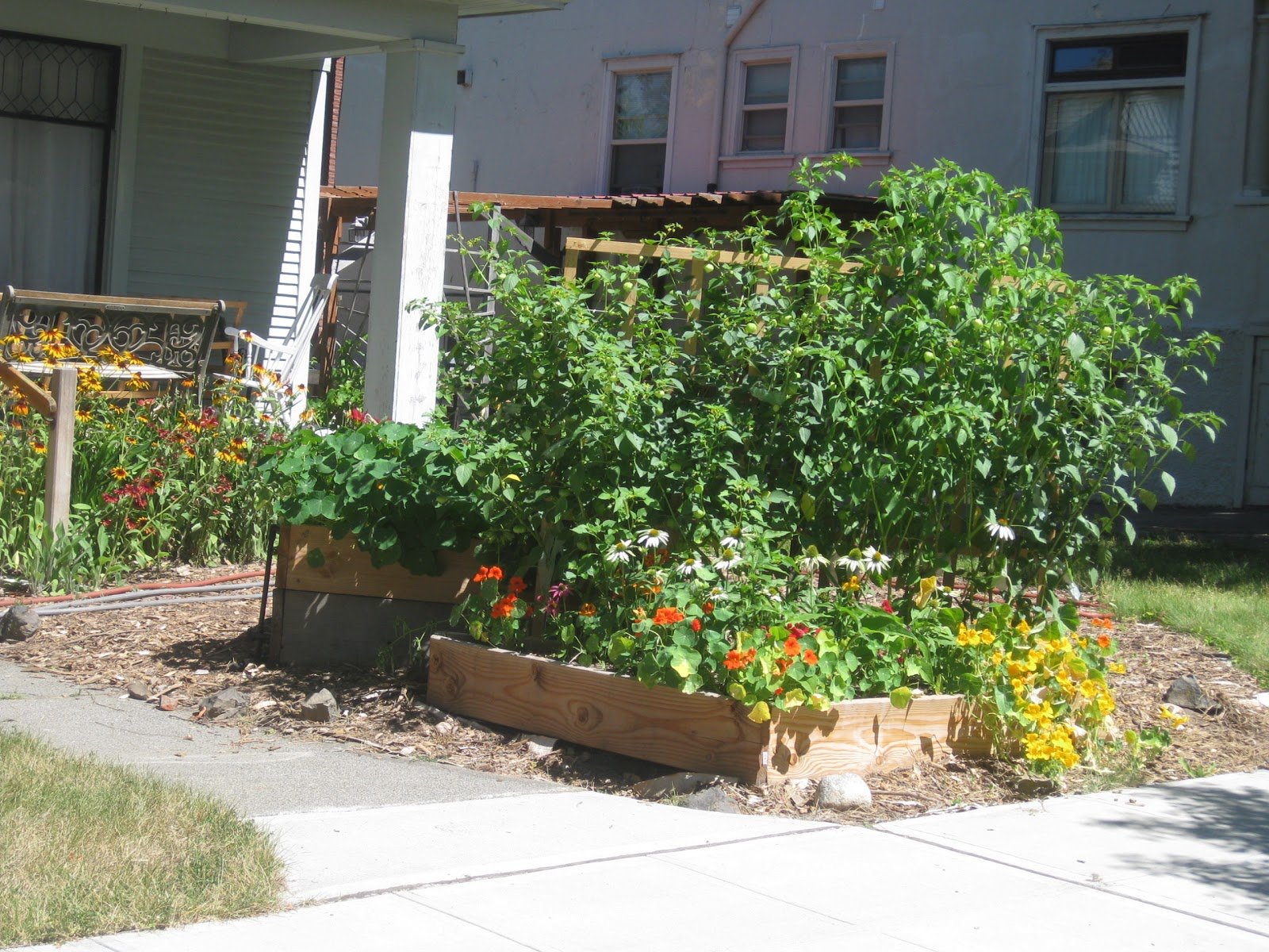 Life In Old Spokane Front Yard Raised Beds Glorious
