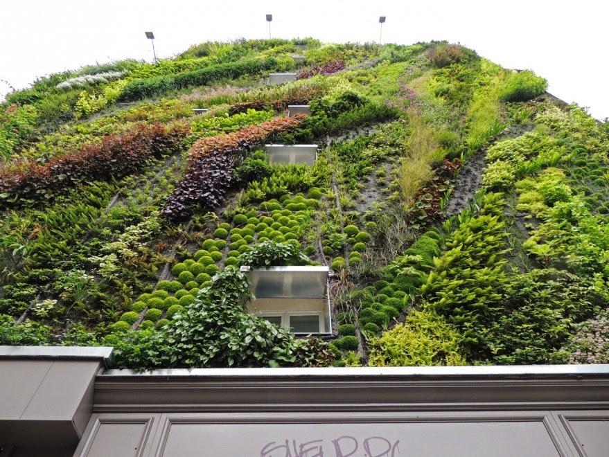 Il giardino delle naiadi soluzioni architettoniche verde - Piante per giardino verticale ...