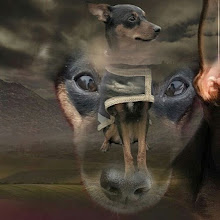 hundenstina_elionor