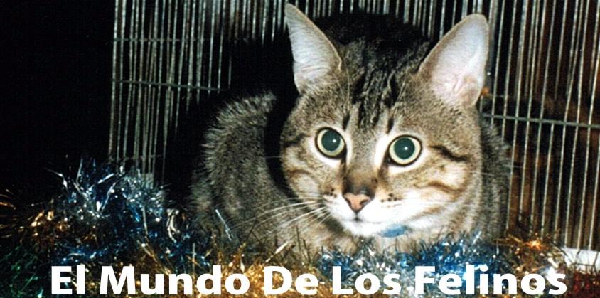 El Mundo De Los Felinos