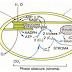 [SVI-S4] - Physiologie Végétale: Photosynthèse