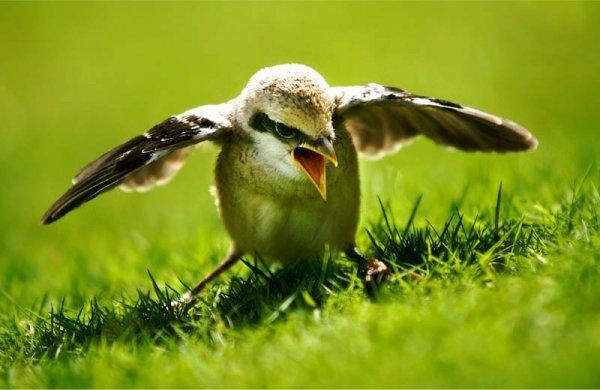 Kelly Martin Speaks: Fledgling Flight - You Have Got Your ...
