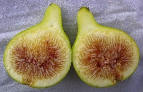 Figs : HOLLIER