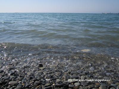 пляж, волна на море