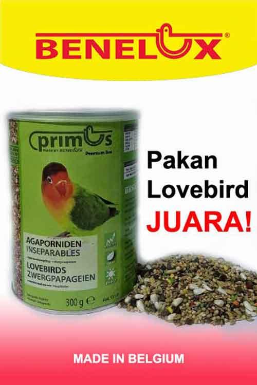 Pakan Burung Lovebird Biar Ngekek
