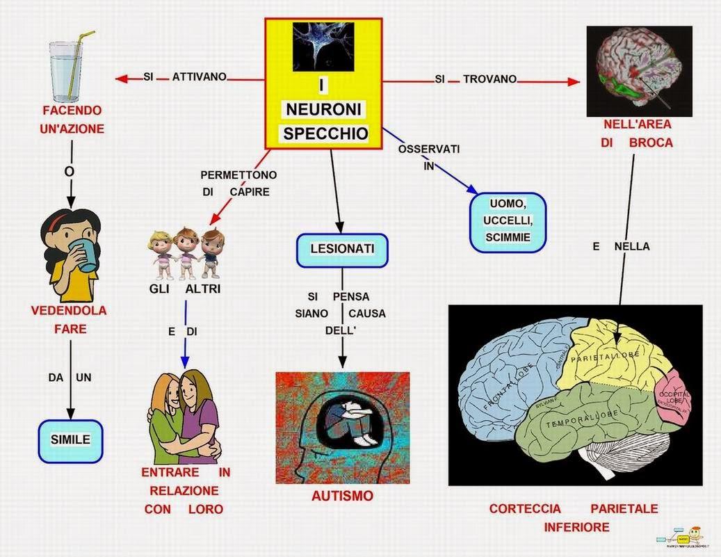 Didattica e cervello aprile 2014 - Neuroni a specchio rizzolatti ...