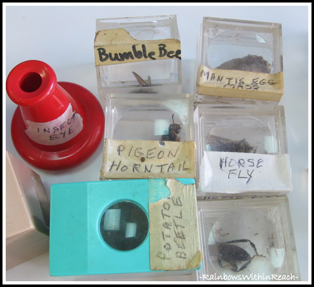 photo of: Science Table of Insect specimens for Examination in Preschool