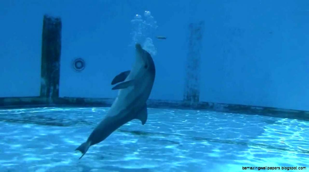 watchin Hope the baby dolphin calf   YouTube