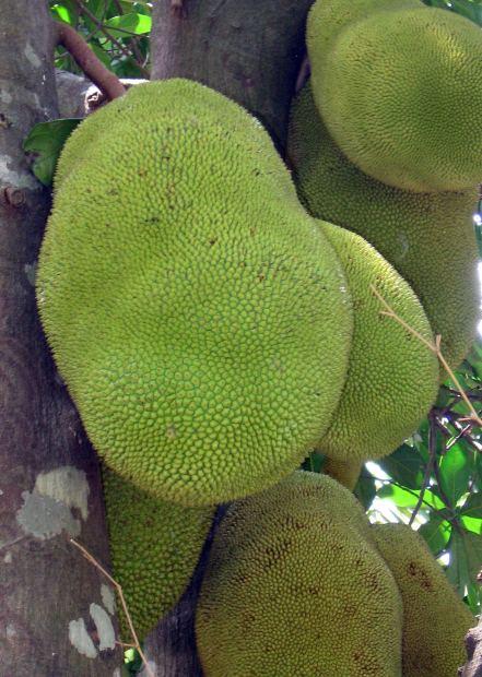 RuralMom.com: Jackfruit Enchilada Casserole #Recipe
