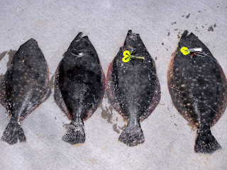 Flounder run in galveston tx for Flounder fishing galveston