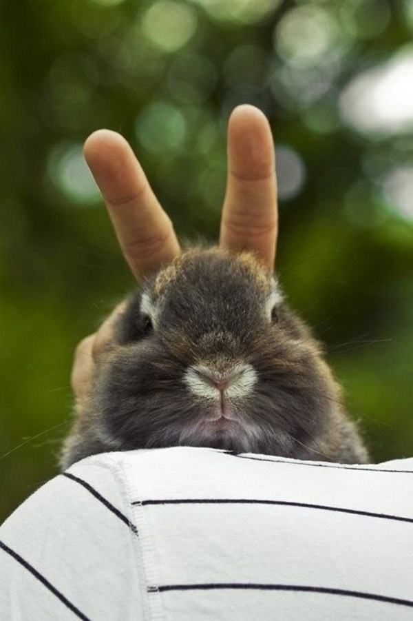 funny animals, animal pictures, bunny ears